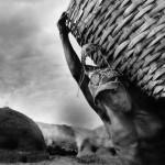 Brasilien: Köhler im Regenwald